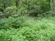 Lot #8 Wiley Road Lucasville OH, 45648
