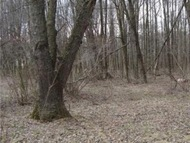 E Main St Ext. Lot 4 Grove City PA, 16127