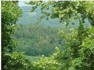 110 Acres Polecat Mountain Estates . Hindsville AR, 72738