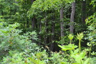 Lot 25 Bills Creek Lane Wilder TN, 38589