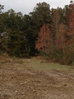 Lot 3-B-1-A Stoney Point Burch Rd. Greenwell Springs LA, 70739