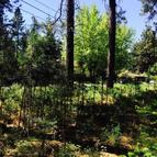 226 Kreiger Creek Rd Careywood ID, 83809
