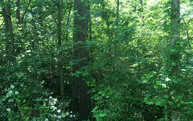 6.6ac Old Mobile Road Lot N/A Mc Caysville GA, 30555