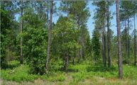 Lot 28 Mitigation Trail Callahan FL, 32011