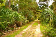 Lot #9 72nd Lane Cedar Key FL, 32625
