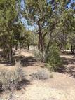Lot 6 Forest Drive Central UT, 84722