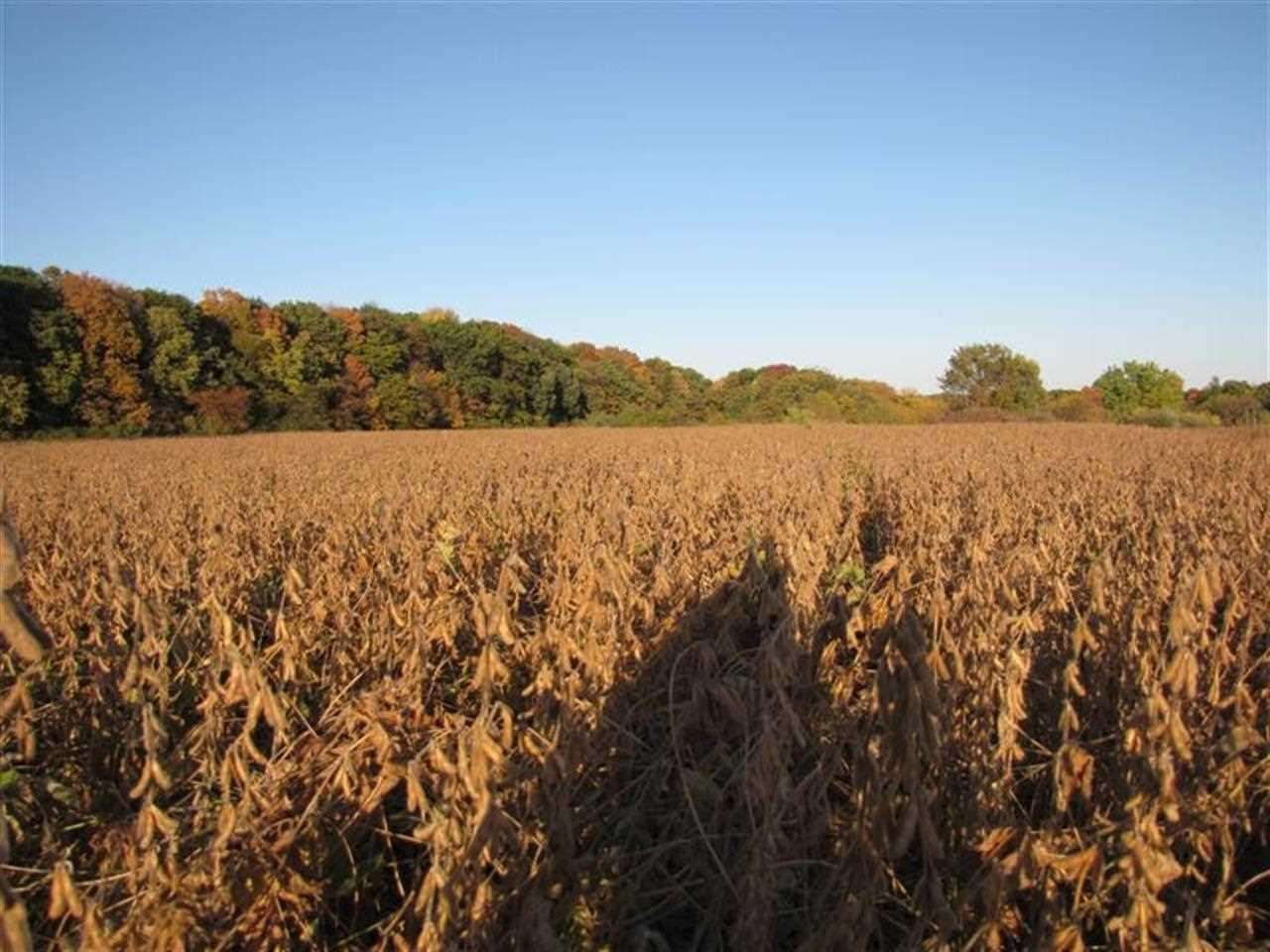 40 Acres 78th Ave W Illinois City IL, 61259